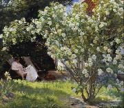 Peder Severin Kroyer Roses Garden in Skagen (nn02) oil